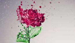 A Splash of Rose eftir Anthony Chang