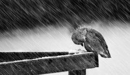 Heavy Winter - Mikael Sundberg